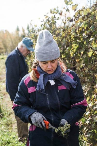 Vins du Québec | Véronique Hupin du Vignoble Les Pervenches