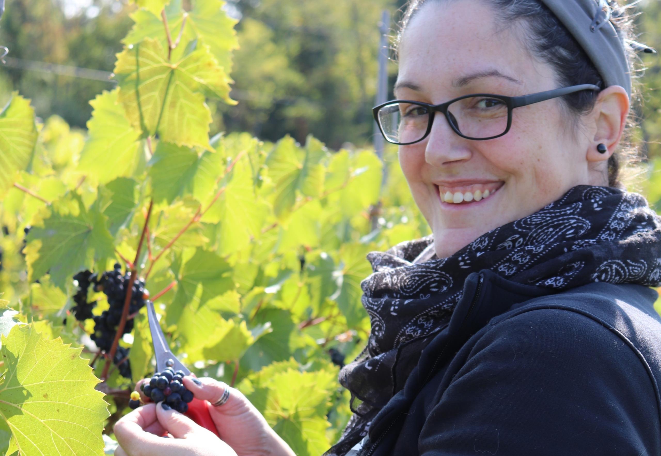 Vendanges 2021 Vin du Québec